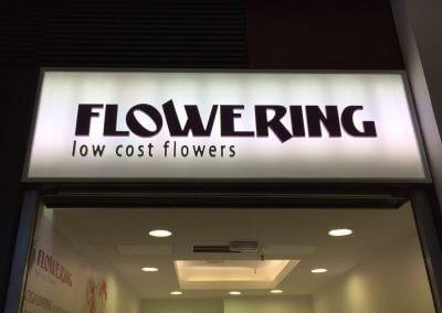 Flowering (4)